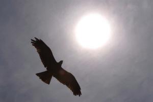 Bon Vol avec les Aigles sous le Soleil !